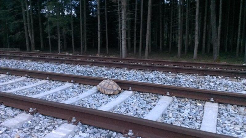 Schildkröte liegt auf Gleisen, © Foto: Bundespolizei München