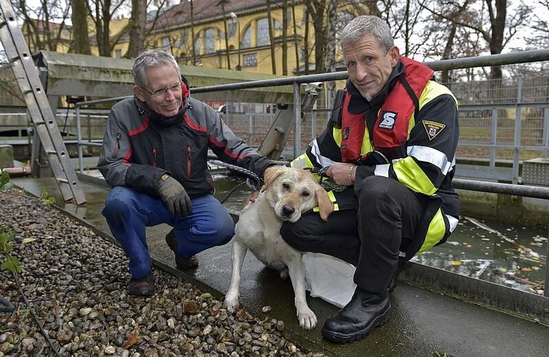 Hund gerettet aus Auer Mühlbach, © Der Hund und seine Retter - Foto: Berufsfeuerwehr München
