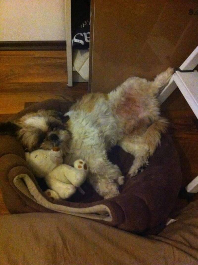 Vermisster Hund