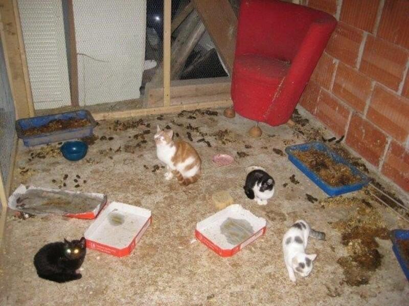 Verwahrloste Katzen, © Foto: Tierschutzverein München e.V.