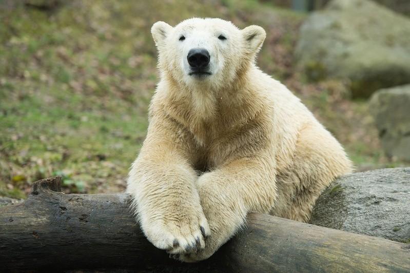 © Foto von Nobby - Sebastian Widmann Tierpark Hellabrunn