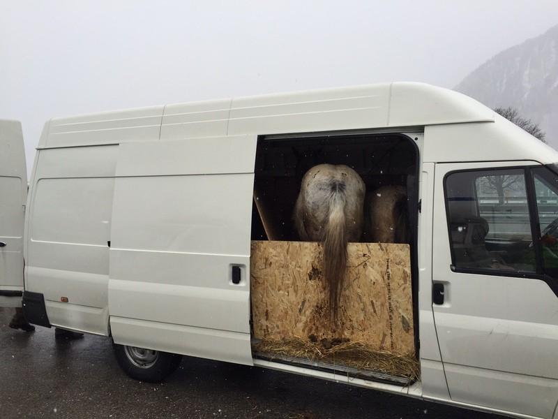 Die Tiere wurden im Transporter schlecht versorgt, © Foto: Polizei
