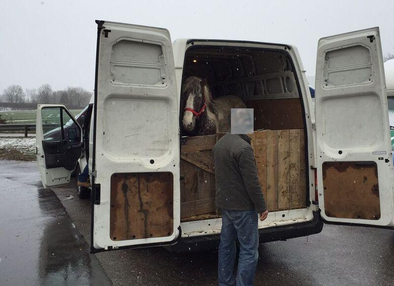 Ponys im Transporter, © Foto: Polizei