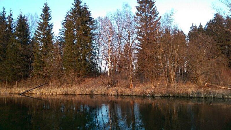"""© An der Loisach hat der Biber einige Bäume """"gefällt"""""""