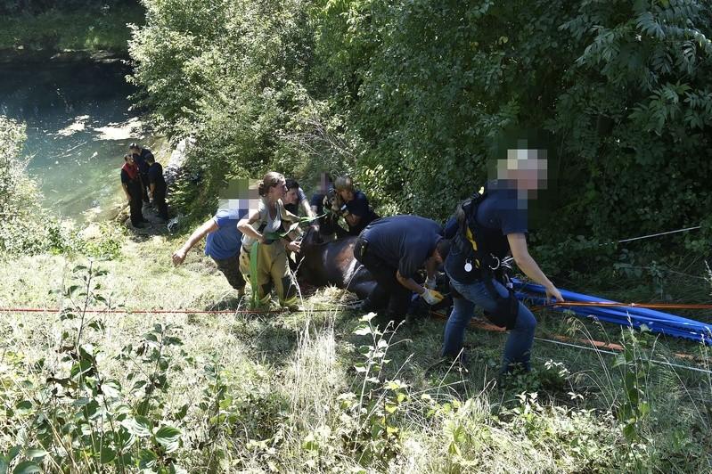 Pferd aus Wassergraben gerettet, © Foto: Berufsfeuerwehr München