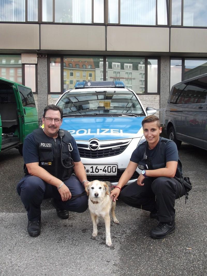 """Polizei sucht nach dem Besitzer von Hund """"Willi"""", © Wem gehört """"Willi""""? (Foto: Polizei)"""