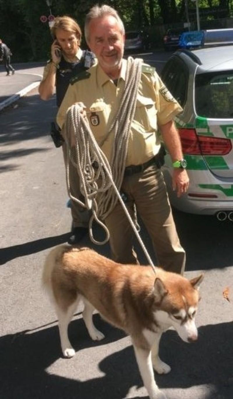 Polizei München: Hundeflüsterer und entlaufener Husky, © Foto Polizei München: Hundeflüsterer und entlaufener Husky