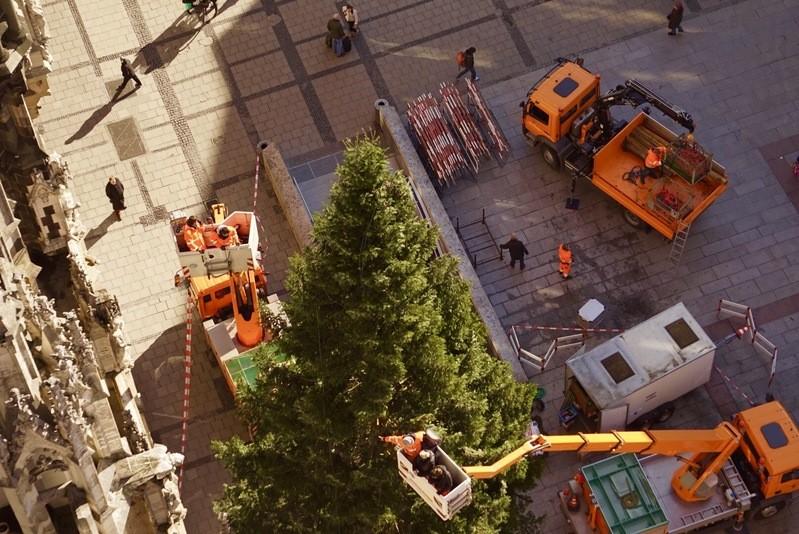 © Der neue Münchner Christbaum am Marienplatz - Foto:  Dirk Schiff/Portraitiert.de