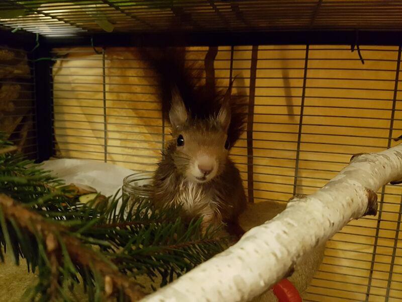 Das Eichhörnchen hat sich wieder erholt., © Foto: Tierrettung München