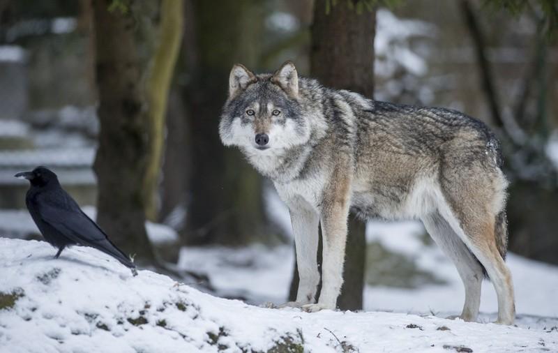 Der M Nchner Tierpark Ganz In Wei Winter Wunderland