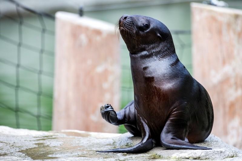 Das neue Robbenbaby, © Foto: Tierpark Hellabrunn / Marc Müller