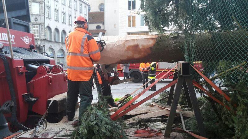 weihnachtsbaum christbaum marienplatz