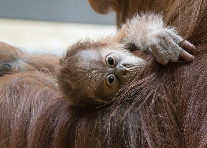 © Foto: Tierpark Hellabrunn/Daniela Hierl