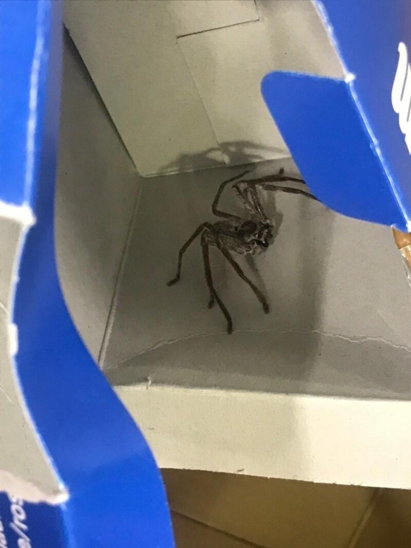 Spinnen-Mann Dating