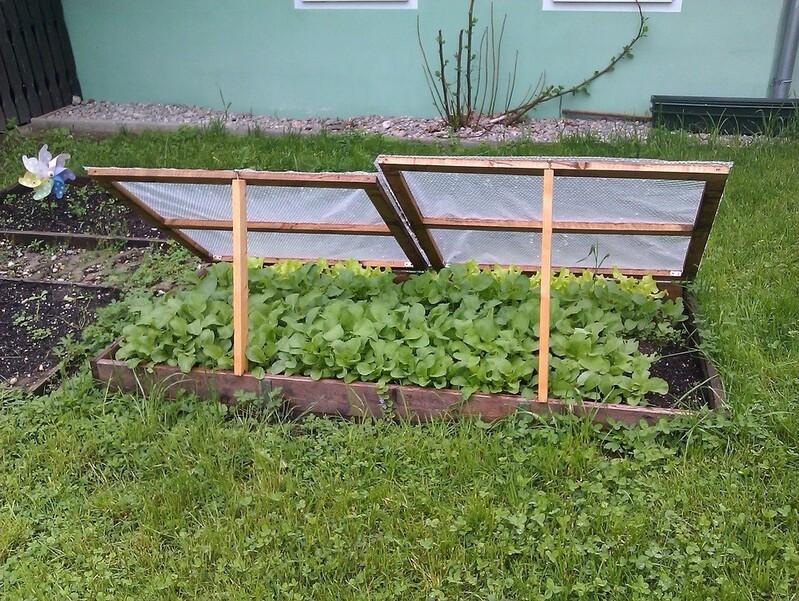 Gemüsebeet in einem Schrebergarten
