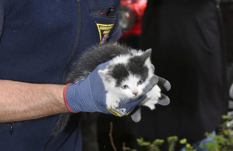 Katze aus Auto befreit , © Foto: Berufsfeuerwehr München