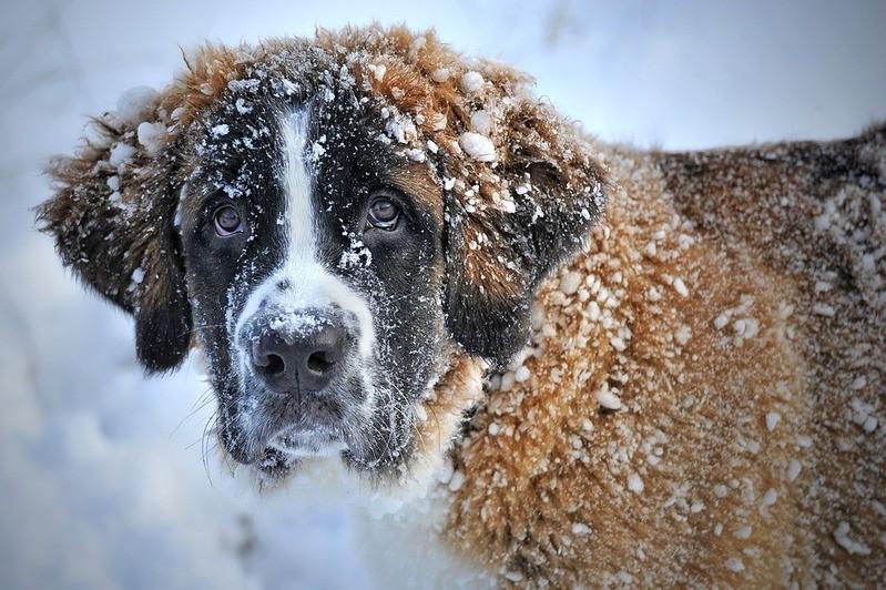 Hund im Schnee, © Symbolbild