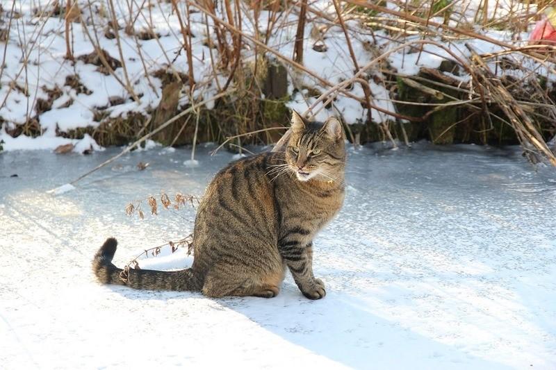 Katze auf dem Eis, © Symbolbild
