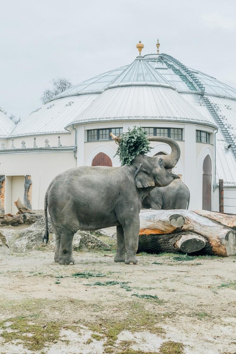 Elefant im Gehege, © Tierpark Hellabrunn/Jan A. Staiger