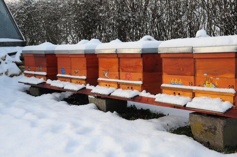 Bienenhäsuchen im Schnee