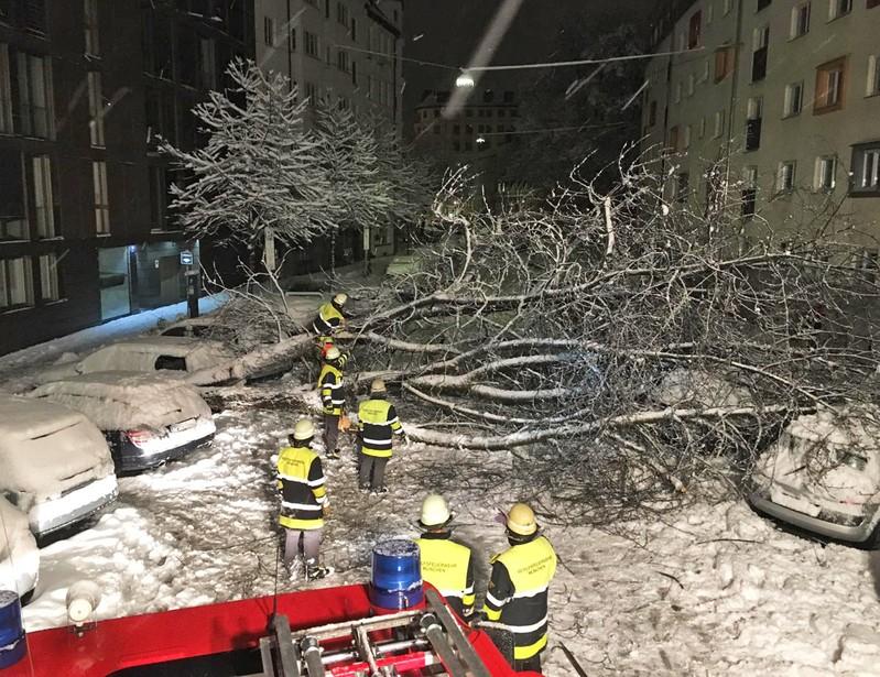 © Umgestürtzter Baum in der Lilienstraße, Foto: Feuerwehr München