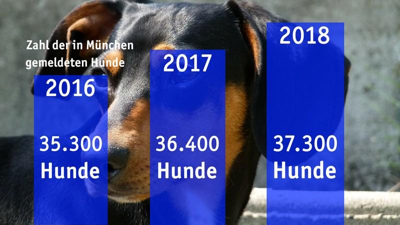 Grafik der Zahl der gemeldeten Hunde in München