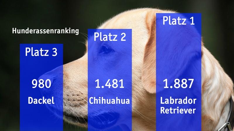 Grafik Hunderanking