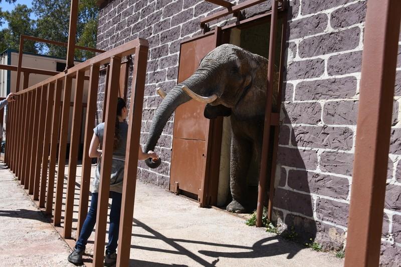 Elefanten in Spanien, © Circus Krone