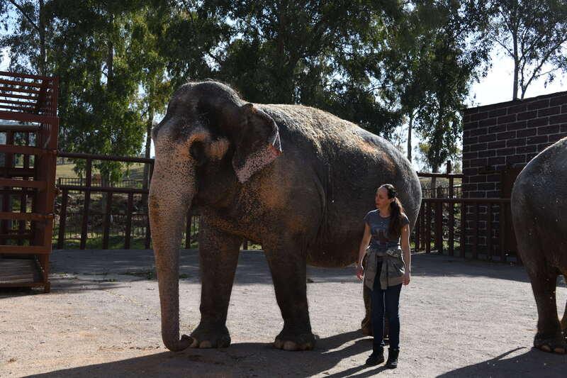 Jana Lacey-Krone mit den Circus Krone Elefanten in Spanien, © Circus Krone