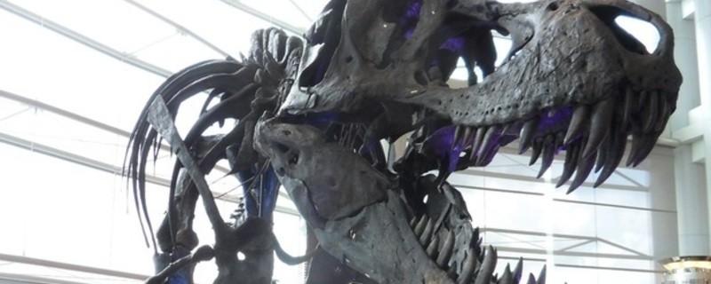 T Rex, © The Munich Show – Mineralientage München