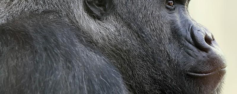 © Tierpark Hellabrunn/Tröger