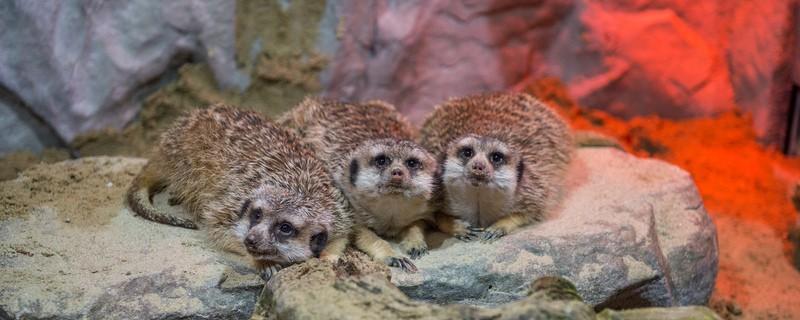 © Tierpark Hellabrunn / Marc Müller