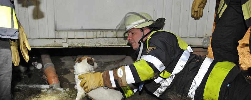 Hund aus Kabelschacht befreit, © Foto der Berufsfeuerwehr München