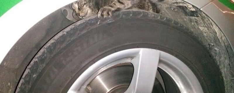 Völlig verängstigt flüchtet diese Katze in den Radkasten des Polizeiautos., © Foto: Polizei München