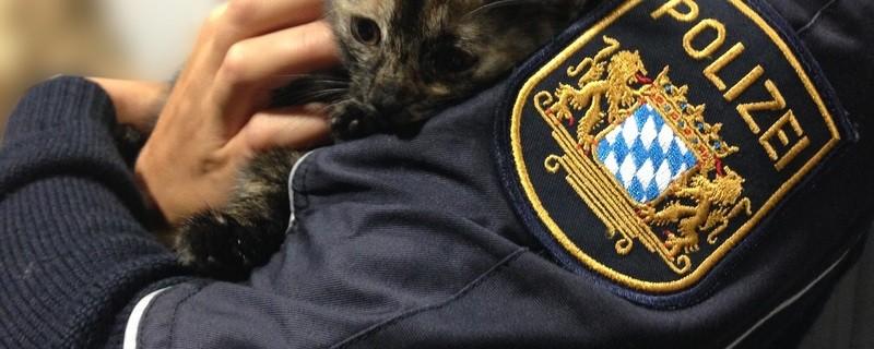 Heute wurde eine Katze aus dem Altstadttunnel gerettet., © Foto: Polizei München