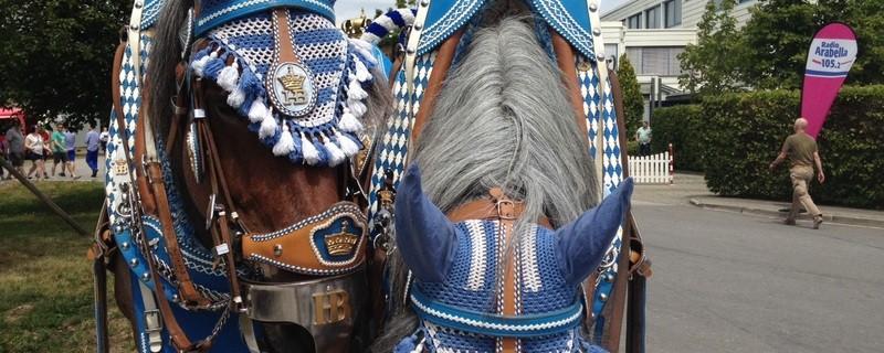 Pferde ganz in blau, Hofbräu geschmückt, © Die Pferde vom Hofbräu