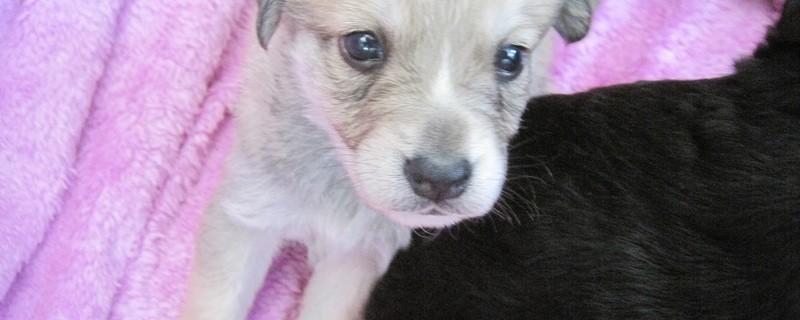 Kleiner süßer Hund Welpe, © In der Ferienzeit setzen vermehrt Hundebesitzer ihre Vierbeiner einfach aus.