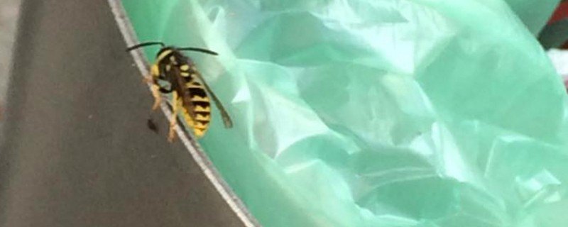 Wespen-Plage: So schützen Sie sich