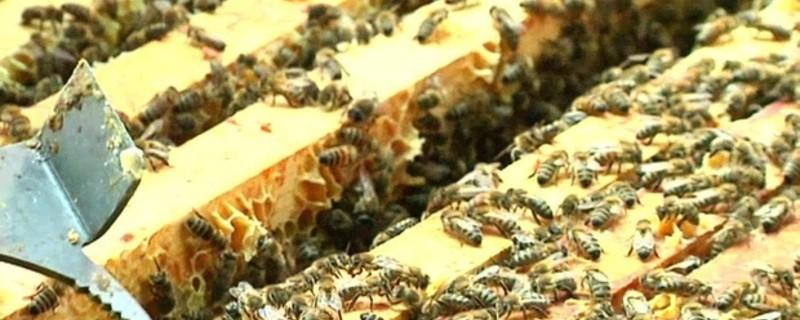Viele Bienen in Ihrem Bienenstock