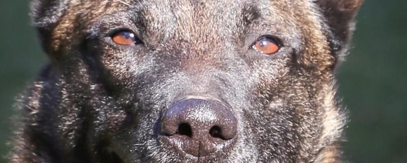 Polizeihund stelle Täter, © Symbolbild Foto Polizei