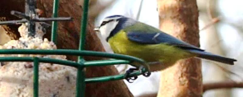 Vogel Vogelhaus Vogelfutter