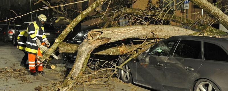 Umgestürzter Baum auf Straße nach Sturm, © Symbolbild - Foto: Berufsfeuerwehr München