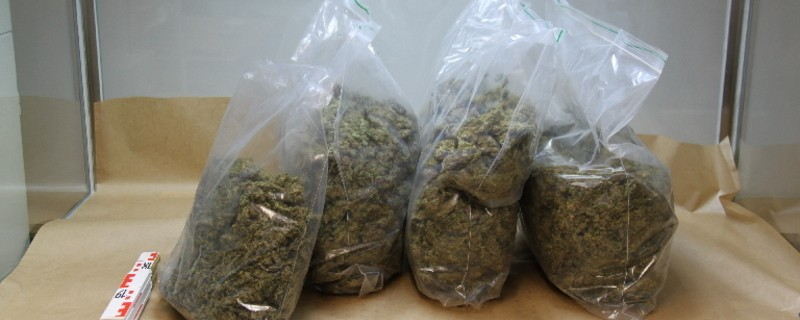 Marihuana-Pflanzen-Bayern, © Symbolfoto. Foto: LKA