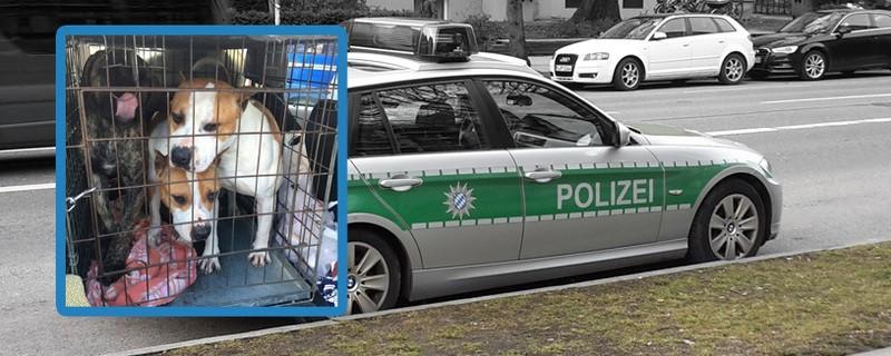 kampfhunde polizei schleierfahnder brunnthal