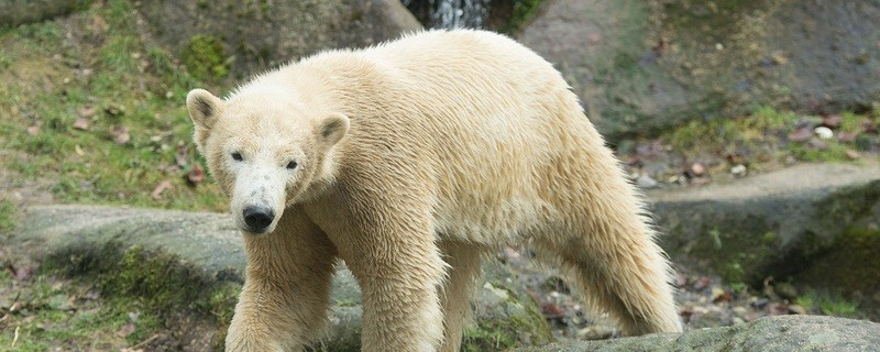 © Foto von Nela - Sebastian Widmann Tierpark Hellabrunn
