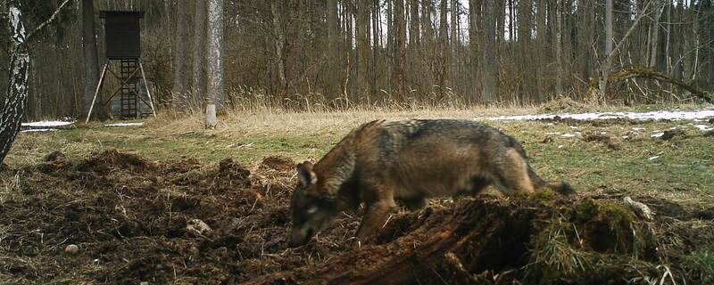 Wolf Starnberg, © Foto:BJV-Kreisgruppe Starnberg