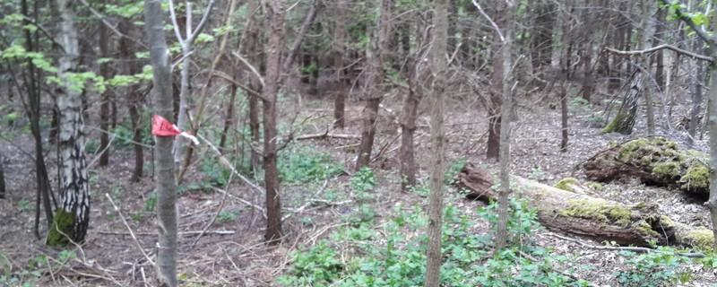 © In diesem Wald wurde die Leiche der Frau gefunden