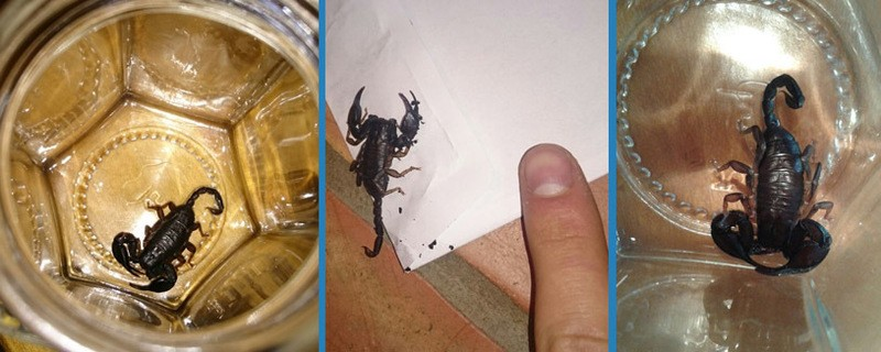 Der gefundene Skorpion, © Fotos: Leonie & Lorenz H./Irschenberg