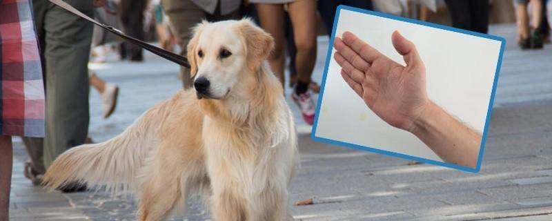 © Weil sein Hund bellte, bekam ein 11-Jähriger einen Schlag ins Gesicht -Symbolfoto