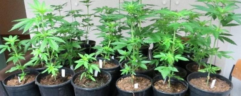 Polizei stellt Marihuana-Plantage fest, © Foto: Polizei